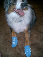 my dog wearing socks